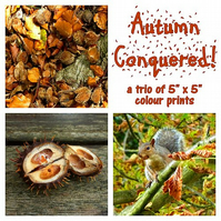 "'Autumn Conquered!' a trio of 5"" x 5"" colour prints"