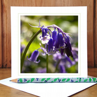 'Into the Woods...' woodland greeting card (woodland bluebell)