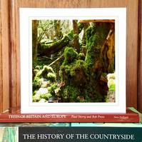 'Into the Woods...' woodland greeting card (woodland moss)