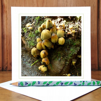 'Into the Woods...' woodland greeting card (woodland fungi)