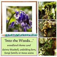'Into the Woods...' single woodland card (bluebell, fern, fungi or moss)