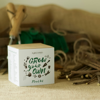Grow Your Own Sweet Liquorice Plant Kit