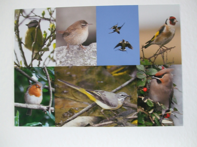 Montage of bird photos.
