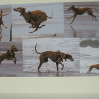 Montage of photos of a Lurcher.