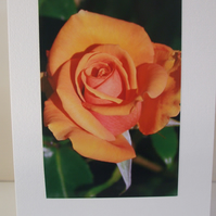 Greeting card with photograph of a rose in peach