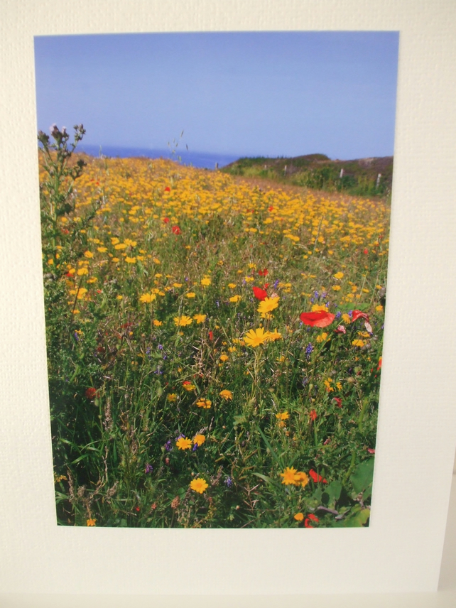 Photographic card of a wild flower meadow at West Pentire, nr. Newquay, Cornwall