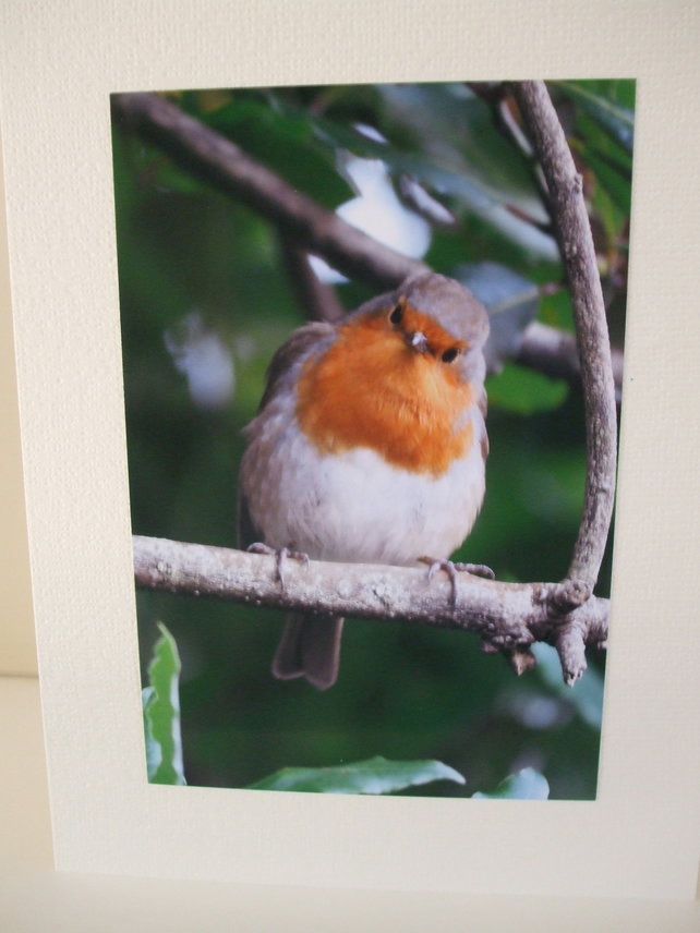 Photographic card of a Robin.