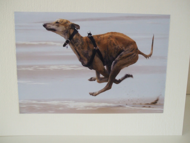 Photographic greetings card of a Lurcher dog.