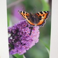 Photographic greetings card of a butterfly on a Buddleia tree.