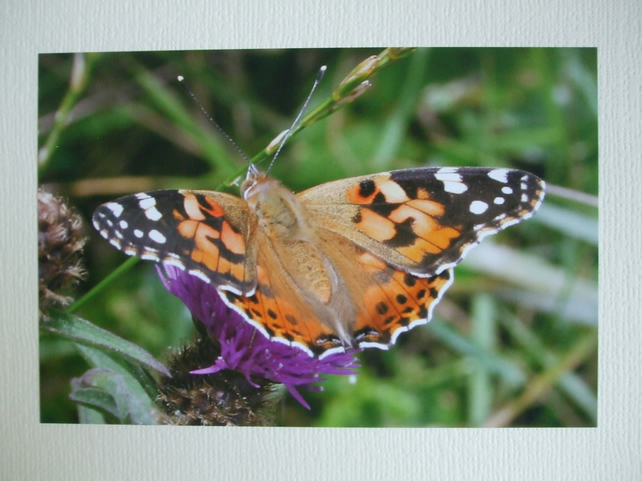 Photographic greetings card of a butterfly on a thistle