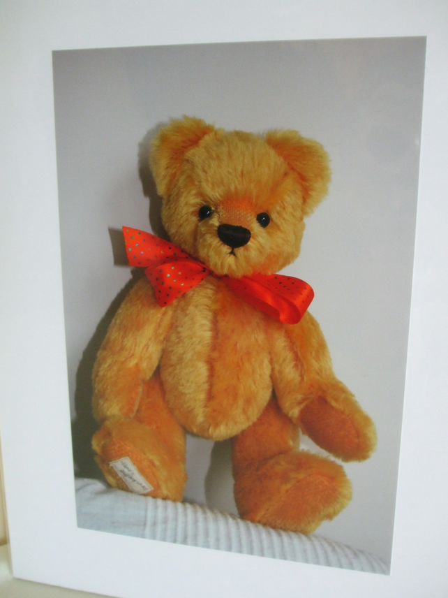 Photographic greetings card of a Teddy Bear.