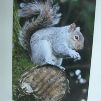 Photographic greetings card of a squirrel .