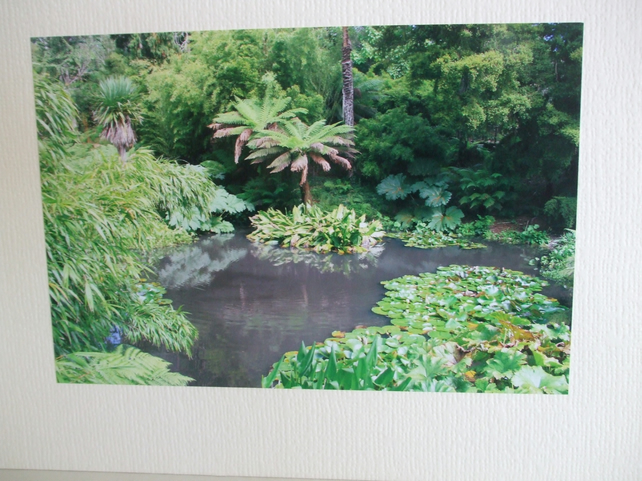 Photographic greetings card of the 'Lost Gardens of Heligan'.