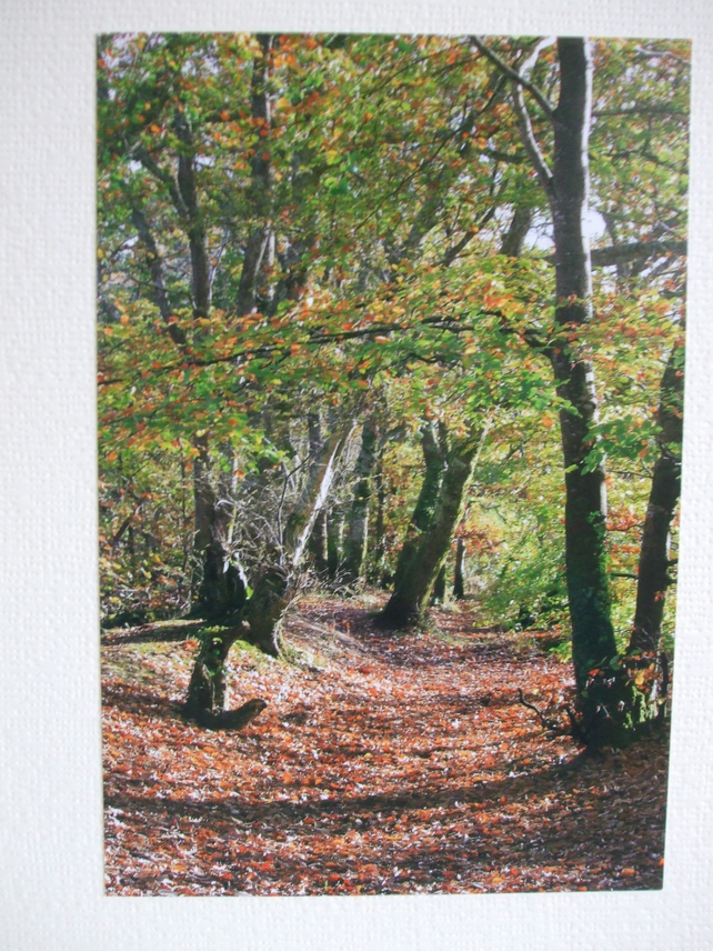 Photographic greetings card of Autumn Trees.