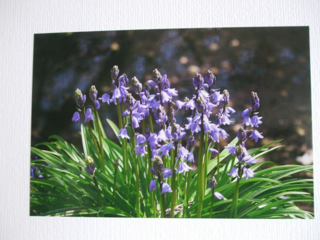 Photographic greetings card of Bluebells.