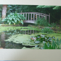 Photographic greetings card of a wooden bridge in Trengwainton N.T. gardens.