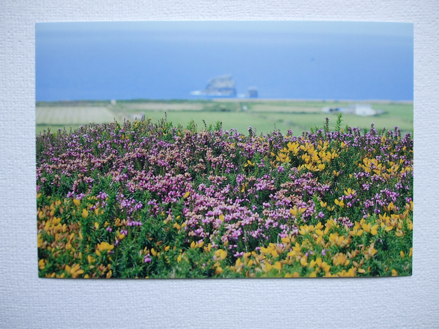Photographic greetings card of Heather on The Beacon, St.Agnes, Cornwall