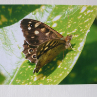 Photographic greetings card of a Speckled Wood Butterfly.