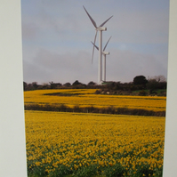 Photographic greetings card of 2 wind turbines and daffodils.
