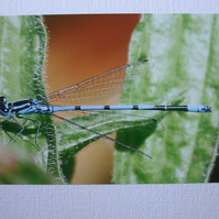 Photographic greetings card of Damsel Fly, at rest, on a leaf.