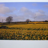 Photographic greetings card of daffodils and wind turbines.