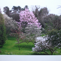 Photographic greetings card of the Spring Blossom in Glendurgan Gardens.