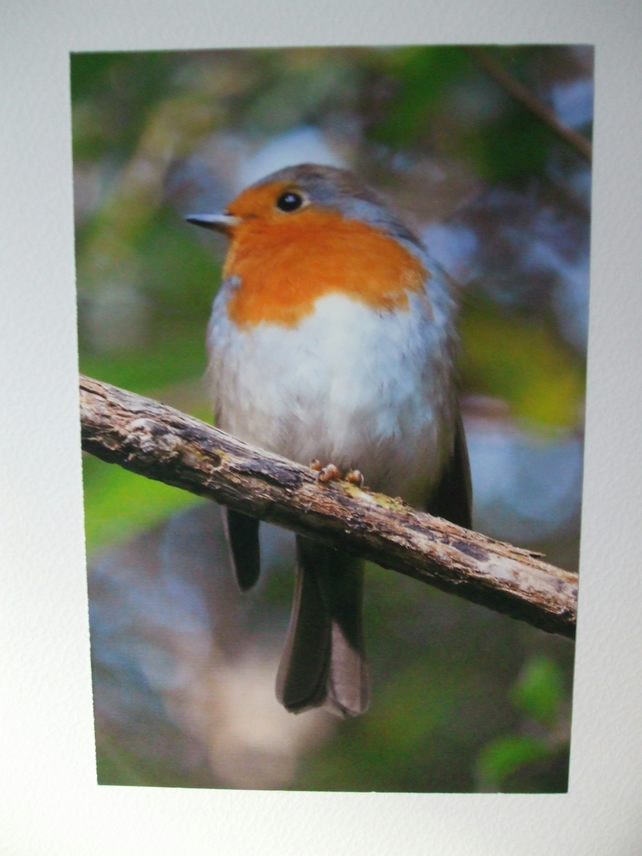Photo of a Robin on a Christmas card.
