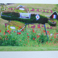 Photographic greetings card of a Spitfire in topiary over poppies, side view.