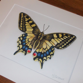 Butterfly swallowtail - original hand painted watercolour artwork
