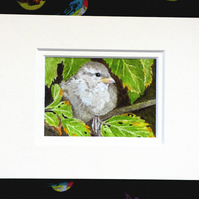 "ACEO 2.5""X3.5"" Original Watercolour House Sparrow Fledgling'. Mounted."