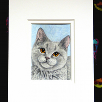 "ACEO 2.5""X3.5"" Original Watercolour 'Innocence'.British Blue Kitten. Mounted."