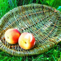 Make this Willow Frame Basket, a Weaving Kit for Complete Beginners