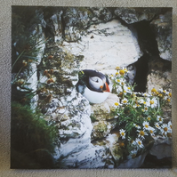 "Ponderous Puffin Canvas Print 8"" X 8"""