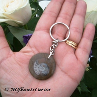 Rounded Ammonite Keyring or Handbag Charm!