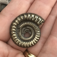 Stunning Large Golden Pyrite Ammonite Fossil for Crafting Project.