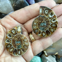 Beautiful Sunstantial Pair of Matched Polished Half Ammonites.