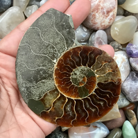 Stunning Large Half Polished Ammonite for Jewellery Designer or photo prop