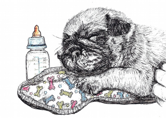 Gorgeous cute Pug Puppy New born Baby Card- Print of Original Drawing A6