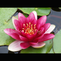 Charity listing (Oldies Club): 3 x A5 photo greetings cards: Water Lily, Riverwalk, Robin