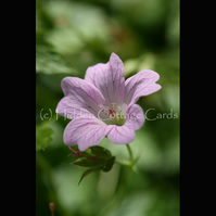 Delicate - A5 photo greetings card - flower, flowers