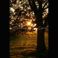 Autumn Trees - A5 photo greetings card