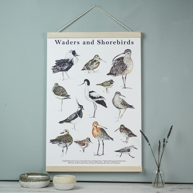 Large Illustrated Guide to Waders and Shorebirds poster