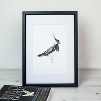 Lapwing bird art print