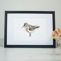 Dunlin bird art print