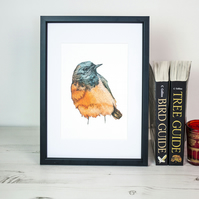 Black Redstart bird print