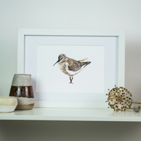 Dunlin shorebird watercolour art print