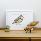 Limited Edition Woodcock bird print