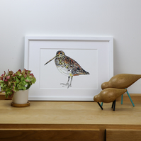 Limited edition illustrated snipe bird print
