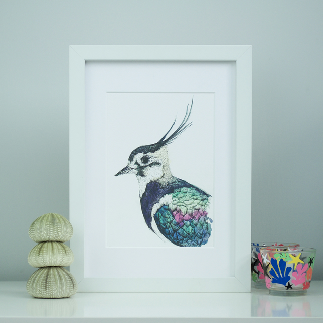 Limited Edition Lapwing portrait bird print