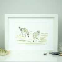 Sanderling pair watercolour and ink bird print